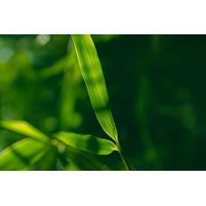 Bambuszlevél vászonkép makrofotó