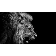 Hím oroszlán - fekete-fehér vászonkép