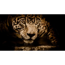 Jaguár ivás közben - állatos vászonkép