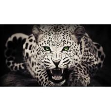 Vicsorgó leopárd - állatós vászonkép