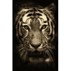 Tigris fej - szépia beütésű állatos vászonkép