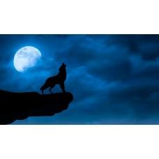 Üvöltő farkas vászonkép